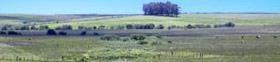 Chacras y campos